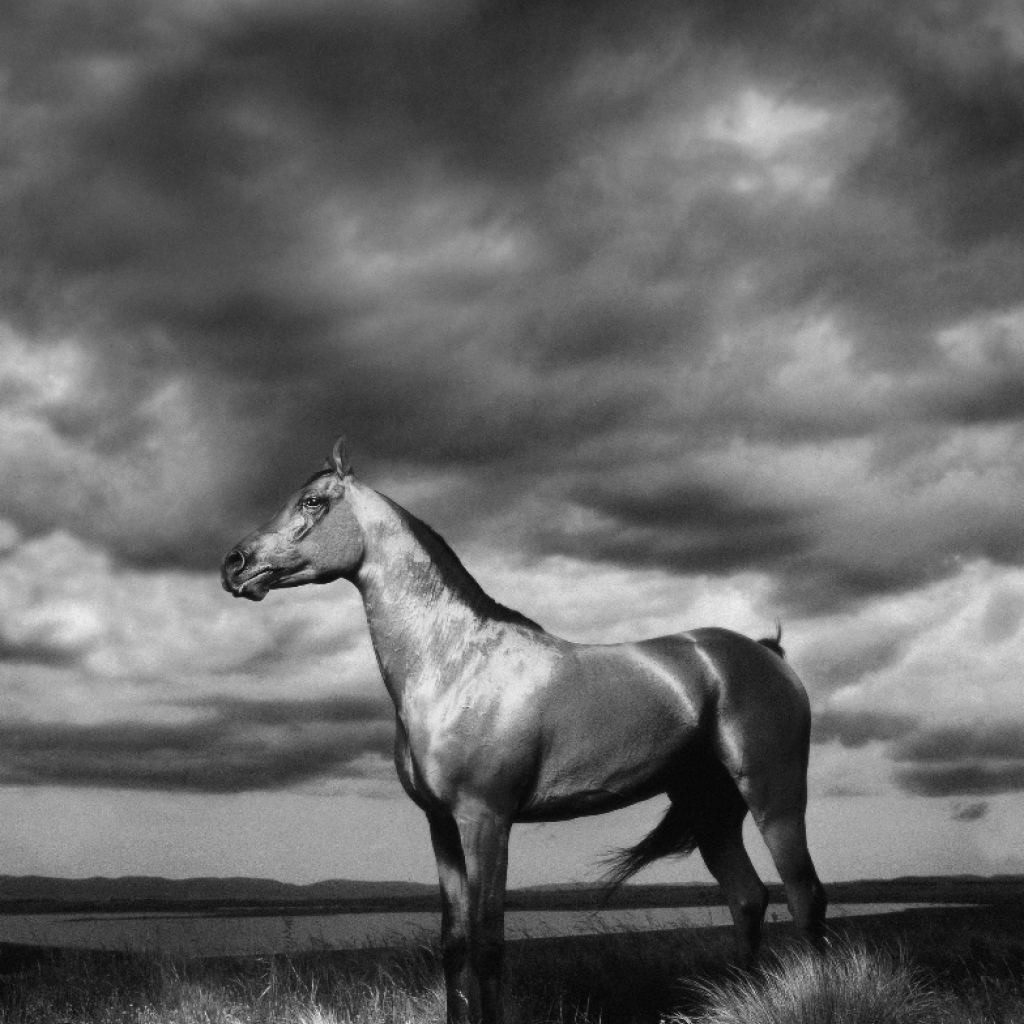 arab_stallion