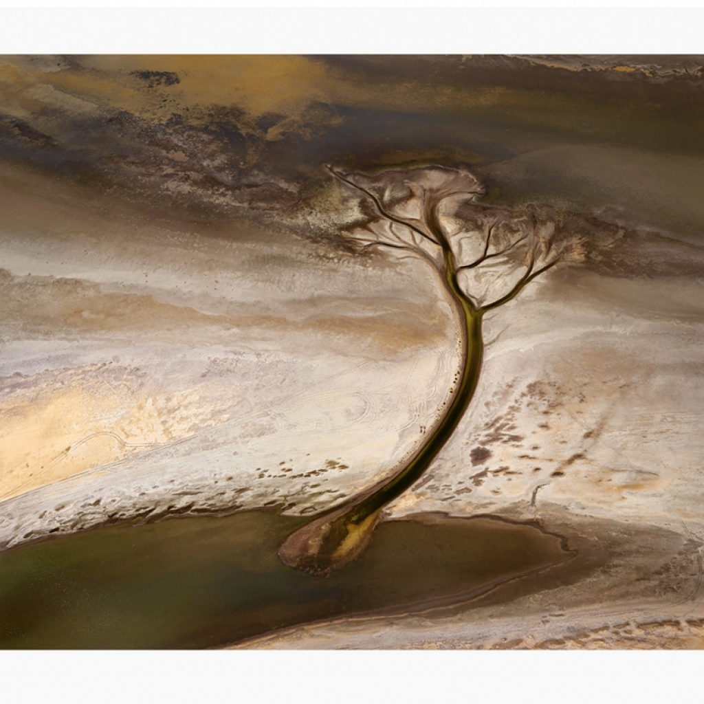 nd5_hewitt_north-tidal-tree