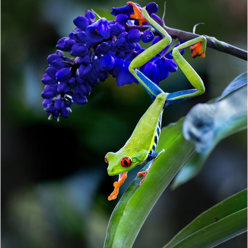 i6w8140_frog_3