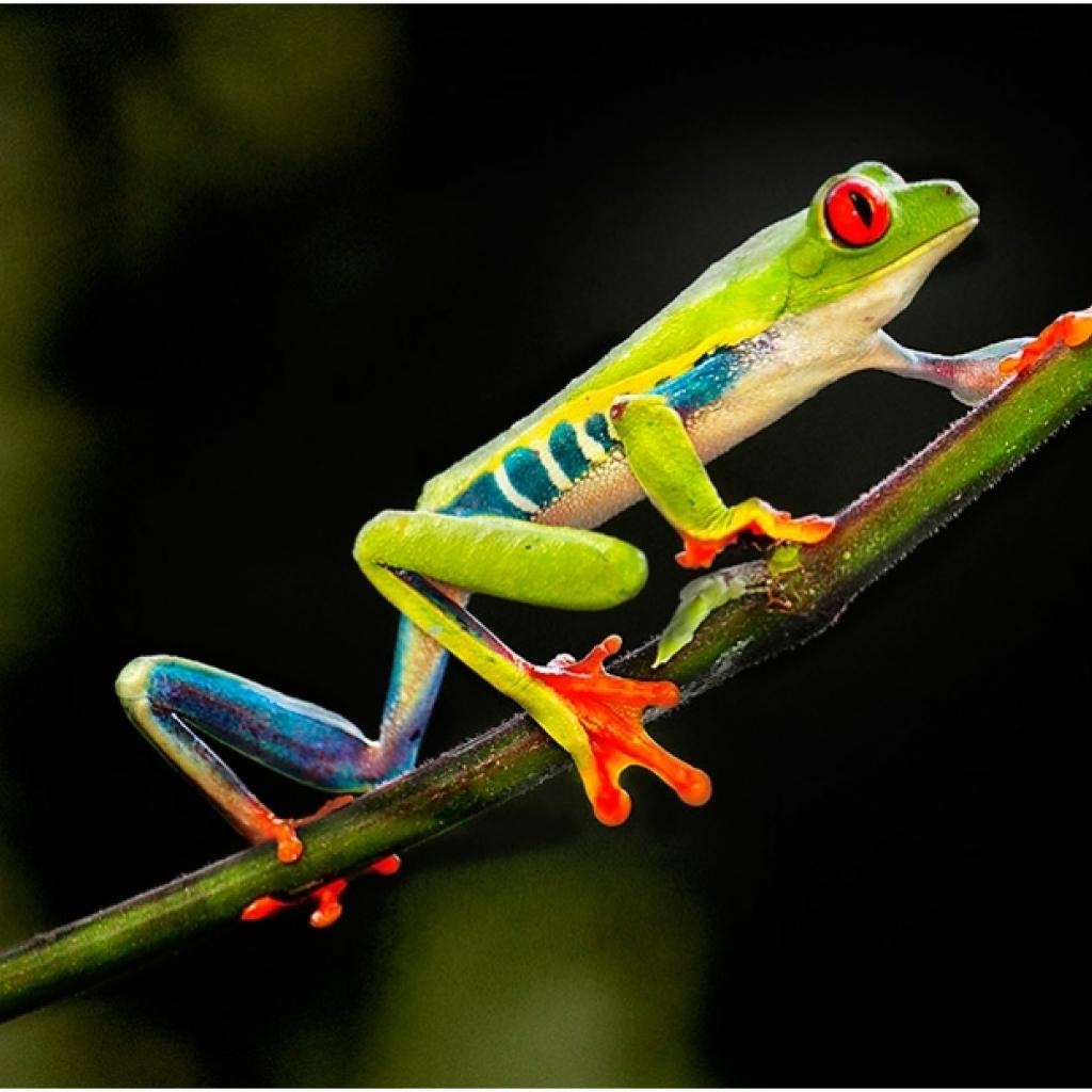 i6w8200_frog_4