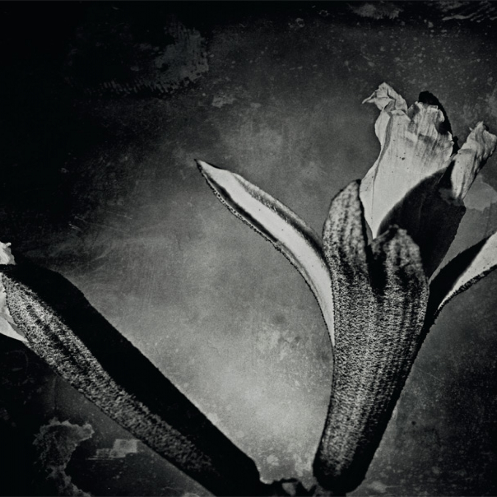 AB-Flora Art Final Crops.indd